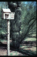 view Benton House: birdhouse in cactus garden. digital asset: Benton House: birdhouse in cactus garden.: 1995 Apr. 1