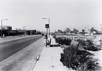 view Public Transit Areas, California Ave. and Anaheim St., Looking North, from the Long Beach Documentary Survey Project digital asset number 1