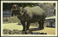 view Blank Postcard of a Rhinoceros at the Zoo digital asset number 1