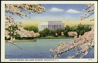 view Postcard of the Lincoln Memorial and Cherry Blossoms digital asset number 1