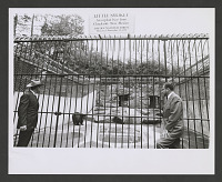 view Little Smokey and two unidentified men in front of his enclosure at the NZP digital asset number 1
