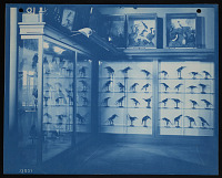 view Birds Exhibit, United States National Museum digital asset number 1