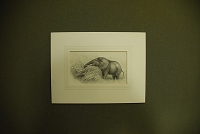 "view Chapman, Abel, 1851-1929, artist. Original pen and ink drawing of ""Elephant cow feeding on cane grass"" digital asset: Chapman, Abel, 1851-1929, artist. Original pen and ink drawing of ""Elephant cow feeding on cane grass"""