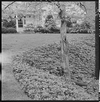 view North Castle (Armonk) -- Unidentified Garden in Armonk, New York, No. 1 digital asset: Town of North Castle -- Unidentified Garden in Armonk, New York, No. 1