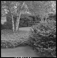 view North Castle (Armonk) -- Unidentified Garden in Armonk, New York, No. 3 digital asset: Town of North Castle -- Unidentified Garden in Armonk, New York, No. 3