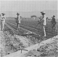 Chinese workers in the field