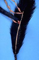 thumbnail for Image 2 - Man's turban plume/feather