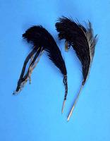 thumbnail for Image 1 - Man's turban plume/feather