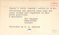 thumbnail for Image 2 - Animal tooth/teeth (Image withheld)