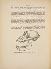 SIMMIDAE. Fig. 5. - Skull of M. rhesus, from Nepal, the type of Hodgson's M. (pithex) oinops. 3/4 nat. size.