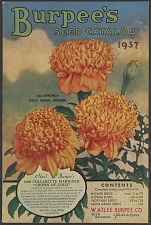 Burpee's Seeds for 1938. New Two Perfect Marigolds Created by Burpee.