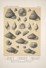 Zekeli. Gasteropoden der Gosaugebilde.