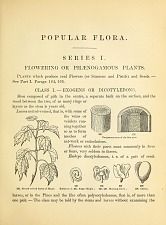 Popular Flora. Flowering or Phænogamous Plants.