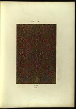 Plate XVI.