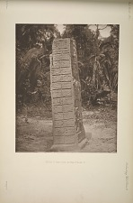 Stela C. West side. See Plate 19 and page 9.