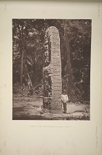 Stela D. West side. See Plate 26 and pages 10 and 11.