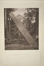 Stela E. West side, See Plate 31 and pages 11-12.