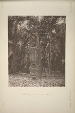 Stela F. South Face, See Plate 36a, and pages 12-13