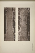Stela F. (a) West side, (b) East side, See Plate 40 and pages 12-13.