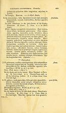Didynamia Angiospermia.  Gerardia.