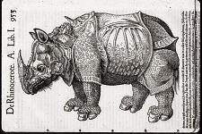 De Rhinocerote.