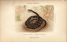 2. Equis del Cauca (Botrops rhomboatus)