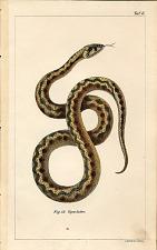 Fig. 13. Viper-Natter