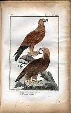 1. Le Grand Aigle Noir. 2. L'Aigle Commun.