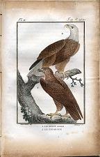 1. Le Petit Aigle. 2. Le Pygargue.