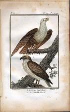 1. Aigle des Grandes Indes. 2. Le Jean-Le-Blanc.