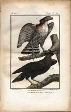 1. L'Aigle Couronné. 2. L'Aigle Noir Huppé d'Amérique.