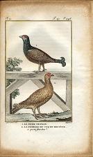 1. Le Petit Tetras 2. La Femelle du Coq de Bruyère à queue fourchue.