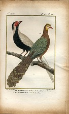 1. Le Faisan noire et blanc de la Chine. 2. L'Eperonnier mâle de la Chine.