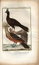 1. Le Pauxi. 2. L'Hoazin sous le nom de faisan Huppe de Cayenne.