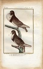1. Le Pigeon grosse groge enflée. 2. Le Pigeon grosse gorge.