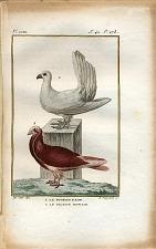 1. Le Pigeon paon. 2. Le Pigeon nonain.