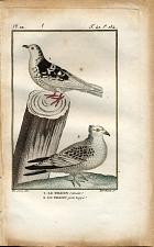1. Le Pigeon romain. 2. Le Pigeon pattu huppé