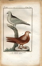 1. Le Pigeon cravate de fritsch. 2. Le Pigeon culbutant.