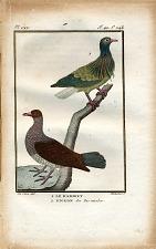 1. le Ramiret. 2. Pigeon des iles nicobar.