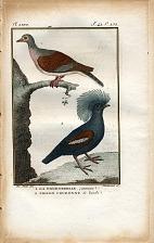 1. la Tourterelle commune. 2. Pigeon Couronné de banda.