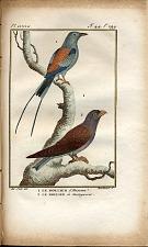 1. Le Rollier d'Abissimie. 2. Le Rollier de Madagascar.
