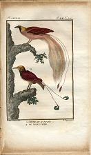 1. L'Oiseau de Paradie. 2. Le Manucode.