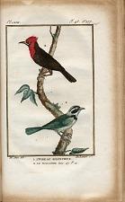 1. L'Oiseau Silencieux. 2. Le Malimbe