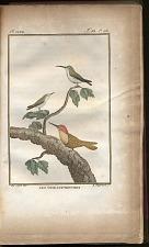 Les Oiseaux-Mouches.