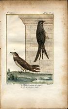 1. L'Hirondelle de rivage. 2. Le Martinet noir.