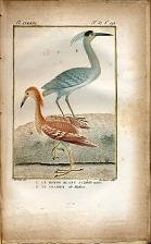 1. Le Heron Blanc a Calotte noire. 2. Le Crabier de Mahon.