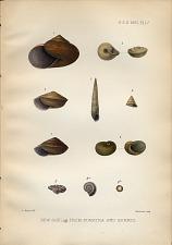 New shells from Sumatra and Borneo