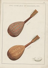 Neapolitan Model Mandolin and