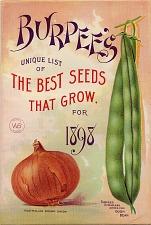 Australian brown onion and Burpee's stringless green pod bush bean