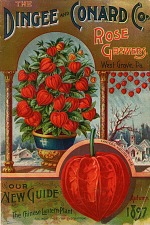 The Chinese lantern plant